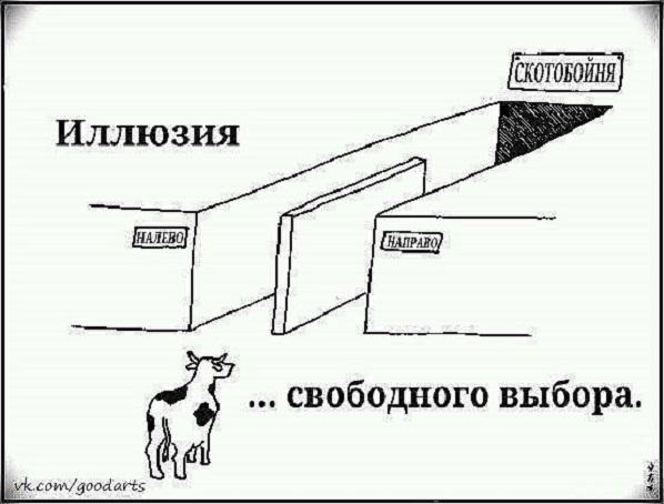 Скот не спрашивают: принуждение украинцев к индийским прививкам это уже не о медицине, это уже о ветеринарии